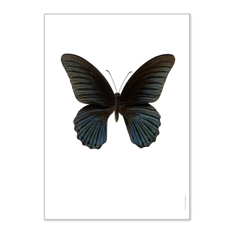 Affiche Entomologique Liljebergs - Poster Papillon noir - Illustration Papilio Memnon - Boutique Les inutiles