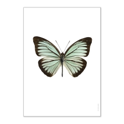Affiche Liljebergs insecte - photo Papillon Turquoise - Illustration Pareronia Valeria Lutescens - Boutique Les inutiles