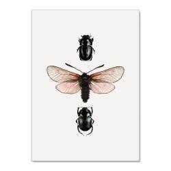 Affiche Entomologique Liljebergs - Poster Papillon rose et Scarabée noir - Boutique Les inutiles