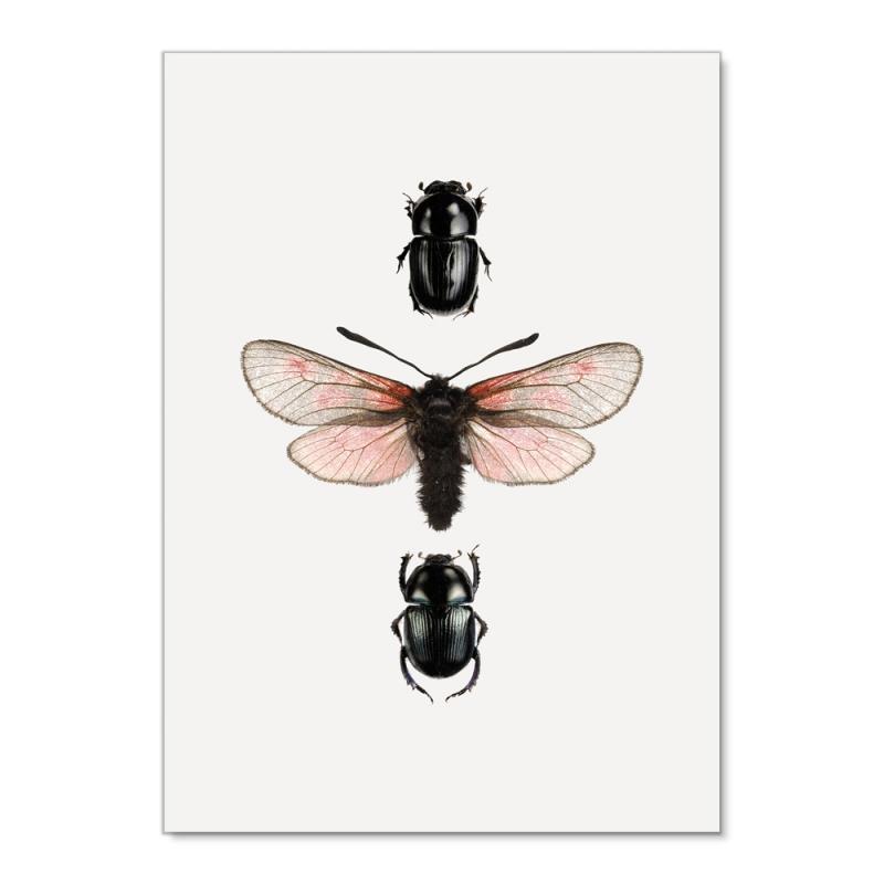 Affiche Insectes Liljebergs - Poster Papillon rose et Scarabée noir - Entomologie - Boutique Les inutiles