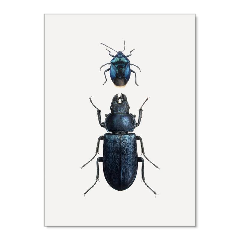 Affiche Insectes Noirs Liljebergs - Poster entomologique coléoptères noirs - Boutique Les inutiles