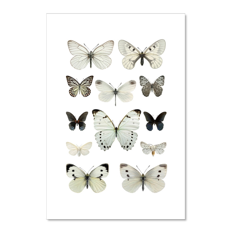 Carte Postale Double - Papillons Blancs - Illustration Entomologique - Macro photographie Liljebergs -  Boutique Les inutiles