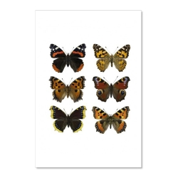 Carte Postale Double - Papillons orange - Illustration Entomologique - Macro photographie Liljebergs -  Boutique Les inutiles