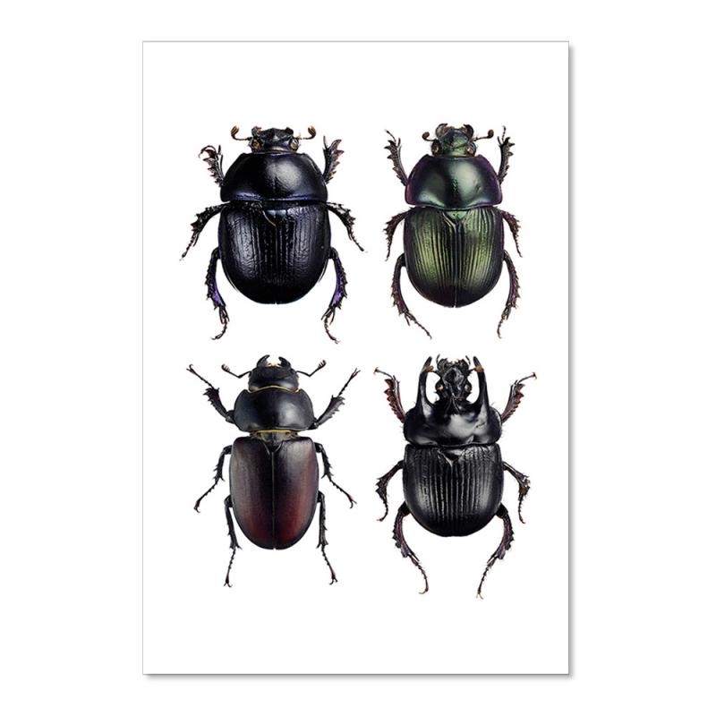 Carte Postale Insectes Noirs - Scarabées - Illustration Entomologique - Macro photographie Liljebergs -  Boutique Les inutiles