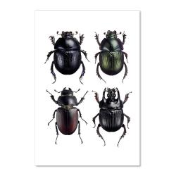 Carte Postale Double - Scarabées noirs - Illustration Entomologique - Macro photographie Liljebergs -  Boutique Les inutiles