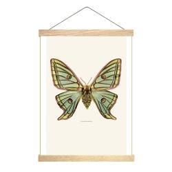 Affiche Entomologique Liljebergs - Poster Papillon Vert - Graellsia isabellae - Porte Affiche en Bois -Boutique Les inutiles