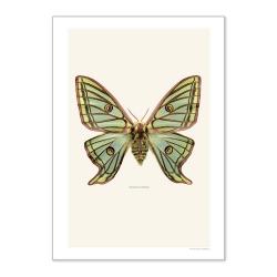 Grande Affiche Entomologique Liljebergs - Insecte Papillon Vert - Photographie Graellsia isabellae - Boutique Les inutiles