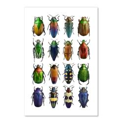 Carte Postale Double - Coléoptères Multicolores - Illustration Entomologique - Macro photographie Liljebergs - Les inutiles