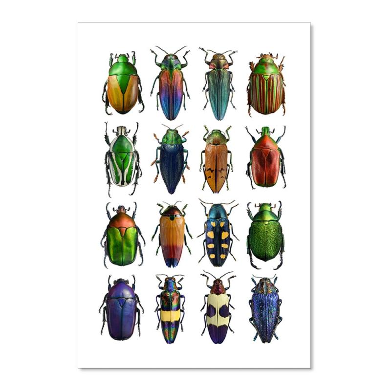 Carte Postale Insectes - Coléoptères Multicolores - Illustration Entomologique - Macro photographie Liljebergs - Les inutiles