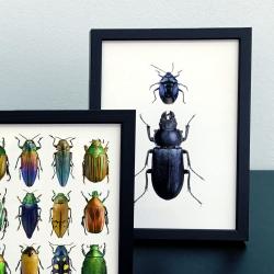 Carte Postale Coléoptères Multicolores - Illustration Entomologique Encadrée - Macro photographie Liljebergs - Les inutiles