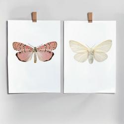 Affiche Entomologique Liljebergs - Poster Papillon rose saumon et blanc - Illustration Utetheisa Ornatrix Bella - Les inutiles