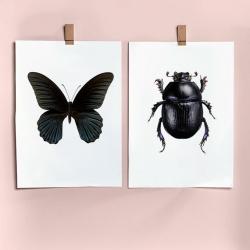 Affiche insectes Scarabée et Papillon noir Liljebergs - Poster insecte - Illustration Entomologique - Les inutiles