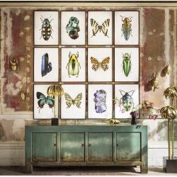 Affiches Insectes, Scarabée et Papillons Liljebergs - Chrysina Strasseni - Boutique Les inutiles