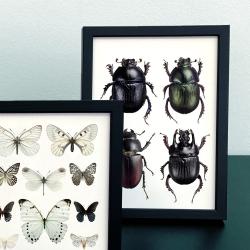 Carte Postale Double - Scarabées et Papillons - Entomologique - Macro photographie Liljebergs -  Boutique Les inutiles