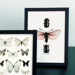Affiche Papillons et insectes Liljebergs - Poster Papillon rose et Scarabée noir insectes - Boutique Les inutiles