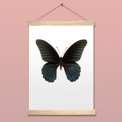 Affiche Entomologique Liljebergs - Papillon noir - Papilio Memnon - accroche poster en chêne - Boutique Les inutiles