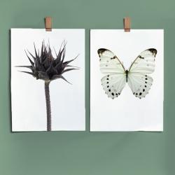 Affiche Botanique Liljebergs - Poster Papillon blanc et fleur de tournesol - Illustration - Boutique Les inutiles