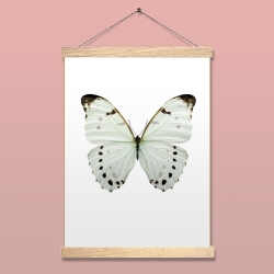 Affiche Insecte Liljebergs - Poster Papillon blanc lune - Illustration Morpho Luna - Boutique Les inutiles