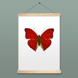 Affiche Entomologique Liljebergs - Poster Papillon Rouge et porte affiche aimanté en bois - Cymothoe Sangaris - Les inutiles