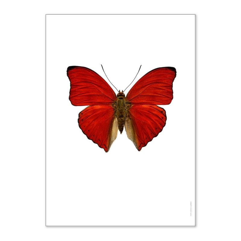 Affiche Entomologique Liljebergs - Poster Papillon Rouge - Illustration Cymothoe Sangaris - Boutique Les inutiles