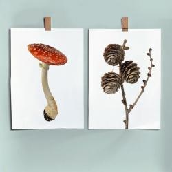 Affiche Liljebergs Amanita Muscaria - Poster Champignon et Pommes de Pin - Illustration Amanite Tue-Mouches - Les inutiles