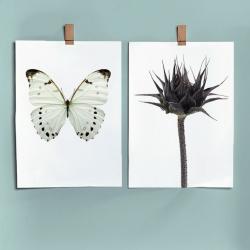 Affiche Botanique Liljebergs Sunflower Bud - Entomologie fleur Papillon Blanc - Déco urban jungle - Boutique Les inutiles