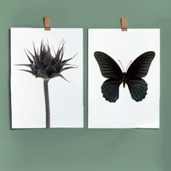 Affiche Liljebergs Sunflower Bud - Macro Photographie Botanique et Entomologie Tournesol et Papillon Noir - Les inutiles