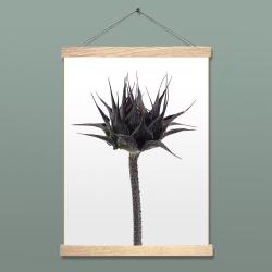 Affiche Liljebergs Sunflower Bud - Poster Botanique Bouton de Tournesol - Porte affiche cordelette et bois - Les inutiles