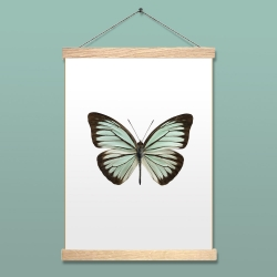 Affiche Entomologique Liljebergs - Poster Papillon Mint - Illustration Pareronia Valeria Lutescens - Boutique Les inutiles