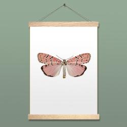 Affiche Entomologique Liljebergs - Papillon rose Utetheisa Ornatrix Bella accroche poster aimanté - Boutique Les inutiles