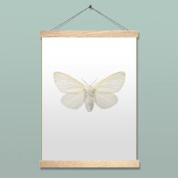 Affiche Insecte Liljebergs - Poster Papillon blanc - Porte affiche aimanté - accroche poster en bois - Boutique Les inutiles