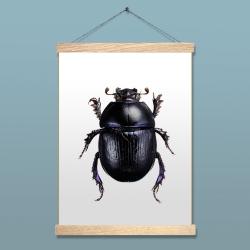 Affiche Scarabée Liljebergs - Anoplotrupes Stercorosus - accroche poster en bois - porte affiche en chêne - Les inutiles