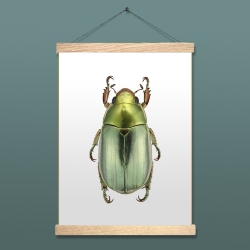 Affiche Coléoptère Vert Liljebergs - Chrysina Strasseni - accroche poster en bois - porte affiche en chêne - Les inutiles