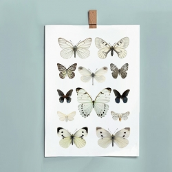 Affiche insectes Liljebergs France - illustration papillons blancs - photo papillon noir - Boutique Les inutiles