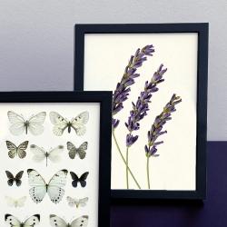 Affiches insectes, botanique et entomologie Liljebergs France - Lavande et Papillons blancs encadrés - Les inutiles