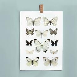 Grande Affiche insectes Liljebergs France - illustration papillons blancs - photo papillon noir - Boutique Les inutiles