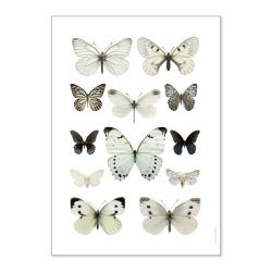 Grande Affiche Papillons Liljebergs - Poster Papillon blanc - Macro photographie insectes déco - Boutique Les inutiles