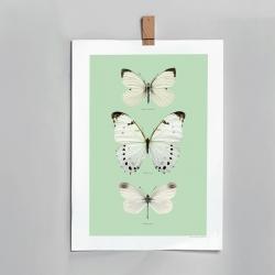 Affiche insectes Liljebergs France - illustration fond vert d'eau papillons blancs - photo papillon noir - Boutique Les inutiles