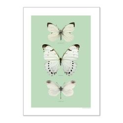 Affiche Papillons Liljebergs - Poster Papillon blanc et mint - Macro photographie insectes déco - Boutique Les inutiles