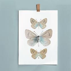 Affiche Insectes Bleu Ciel - Papillons Liljebers - Livraison en France - Boutique Les inutiles Paris