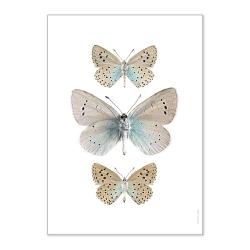 Petite affiche papillons beiges et bleus - Photo insectes déco - Liljebergs Livraison France - Boutique Les inutiles