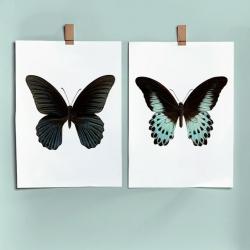 Affiches Entomologiques & Botaniques Liljebergs • Boutique Lesinutiles